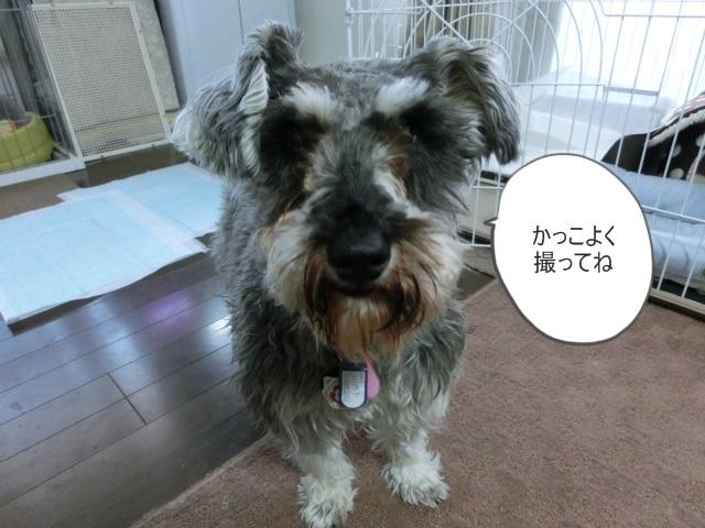 2014,03,07 シンちゃん来訪の巻 052