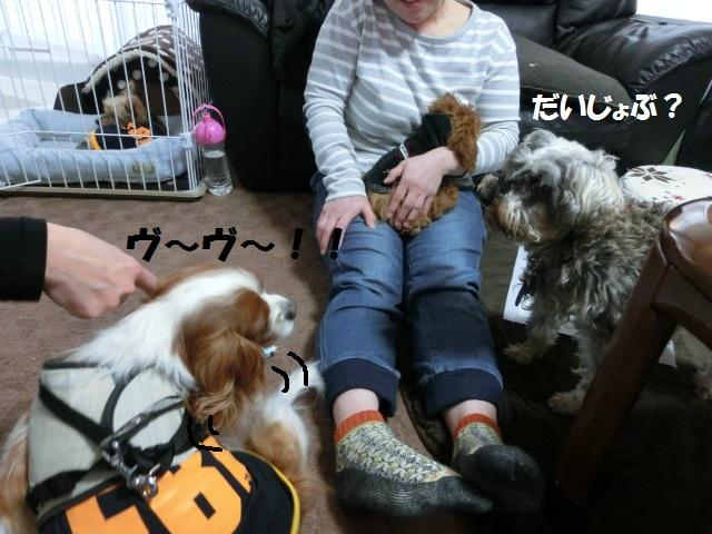 2014,03,07 シンちゃん来訪の巻 068