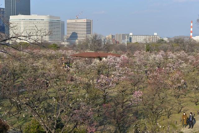 s-2014,03,16 大阪城公園 梅林 013