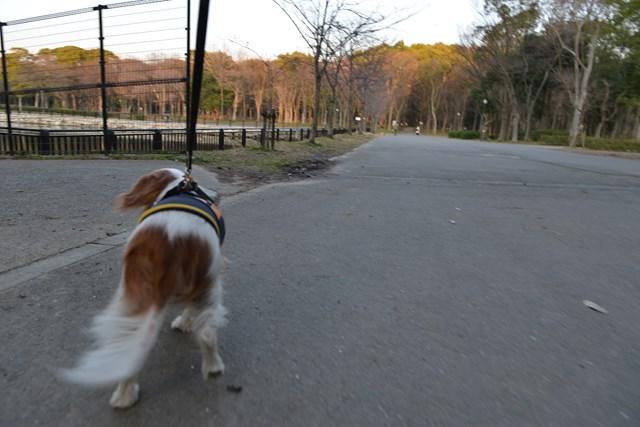s-2014,03,16 大阪城公園 梅林 152