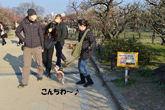 s-2014,03,16 大阪城公園 梅林 020