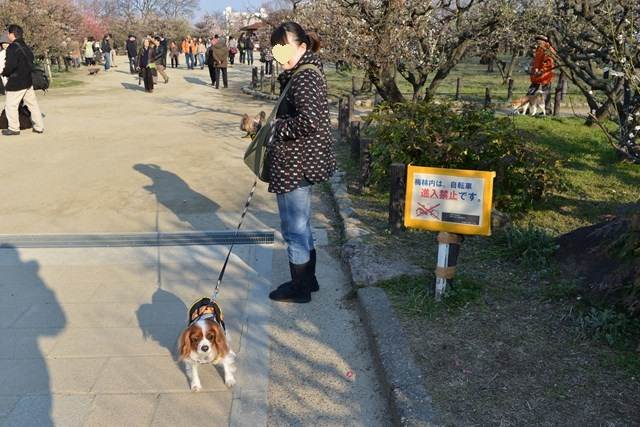 s-2014,03,16 大阪城公園 梅林 021
