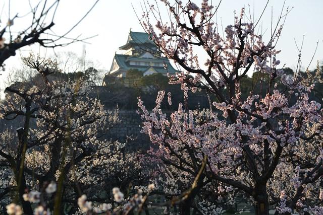 s-2014,03,16 大阪城公園 梅林 133