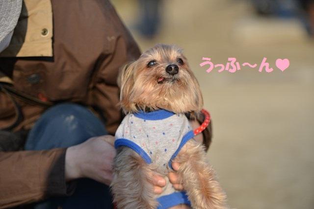 s-2014,03,16 大阪城公園 梅林 053