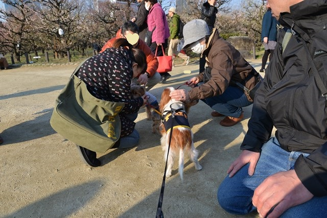 s-2014,03,16 大阪城公園 梅林 023