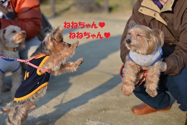 s-2014,03,16 大阪城公園 梅林 065