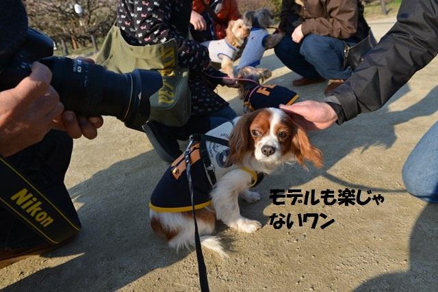 s-2014,03,16 大阪城公園 梅林 027