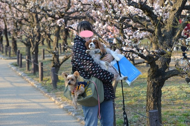 s-2014,03,16 大阪城公園 梅林 121
