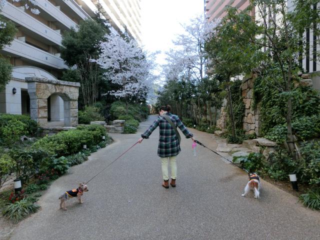 2014,04,02 三度、葛西公園へwith洋ちゃん 001