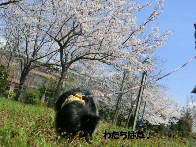 2014,04,03 コロンちゃんと舞洲へ 010