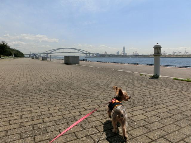 2014,04,03 コロンちゃんと舞洲へ 049