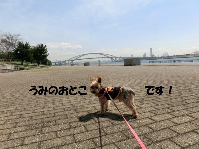 2014,04,03 コロンちゃんと舞洲へ 052