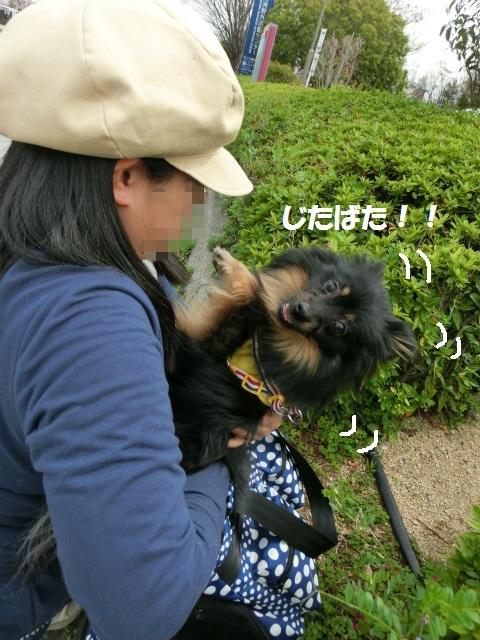 2014,04,03 コロンちゃんと舞洲へ 099