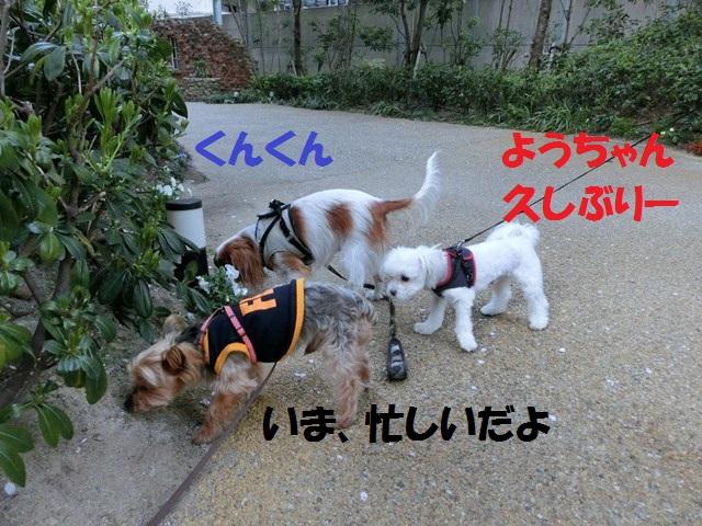s-2014,04,14 まるちゃん散歩 002