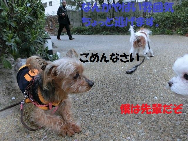 s-2014,04,14 まるちゃん散歩 010