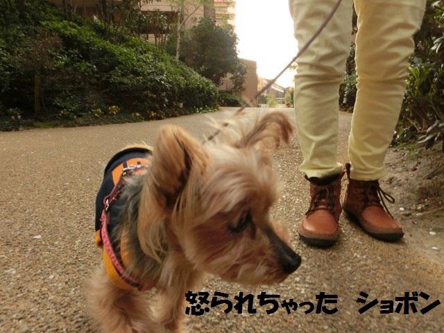 s-2014,04,14 まるちゃん散歩 013