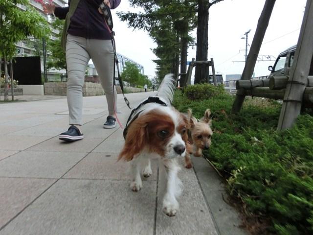 s-2014,05,14 夕方散歩 022
