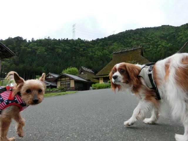2014,05,23 新緑の美山 066