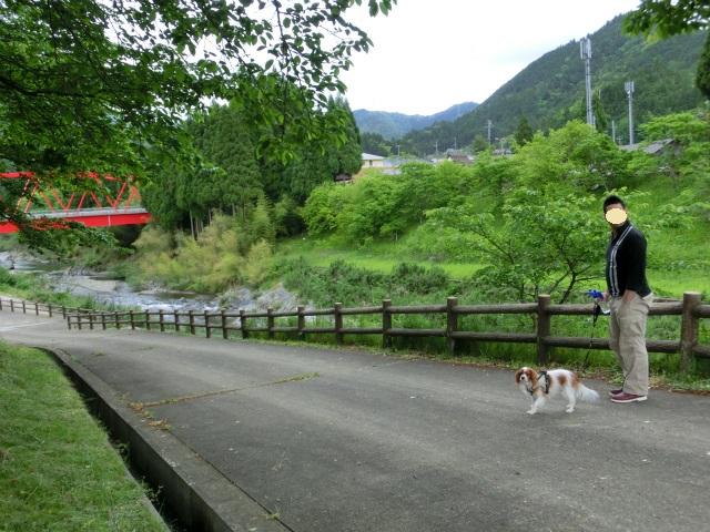 2014,05,23 新緑の美山 021