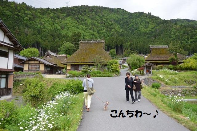 s-2014,05,23 新緑の美山 119