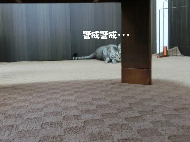 2014,06,01 ガウちゃん来訪の巻 049