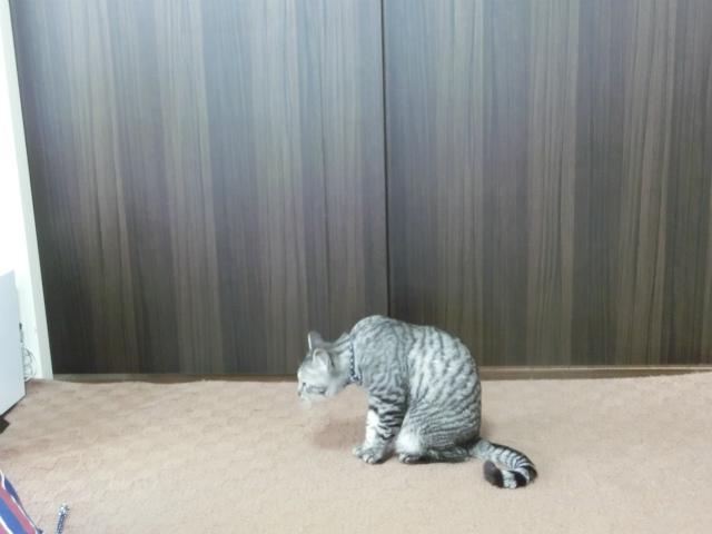 2014,06,01 ガウちゃん来訪の巻 053
