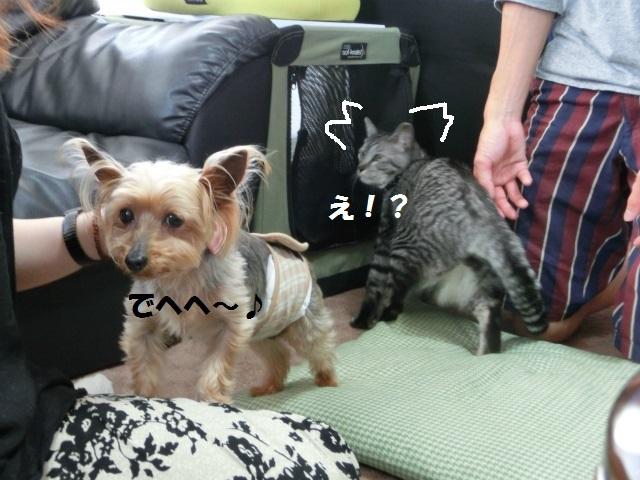 2014,06,01 ガウちゃん来訪の巻 048