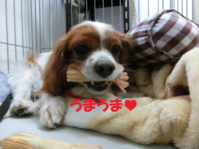 2014,06,01 ガウちゃん来訪の巻 035