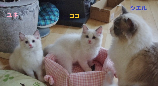ユキ&ココ&シエルIMGP4618