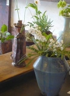 plants-table
