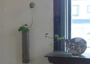 plants-hidarikabe