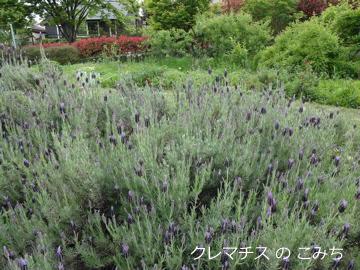 tree_of_life_garden_1.jpg