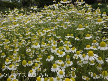 tree_of_life_garden_11.jpg