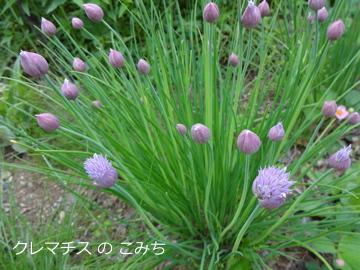 tree_of_life_garden_14.jpg