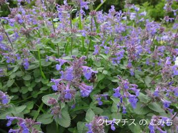 tree_of_life_garden_4.jpg