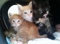 kittykittens