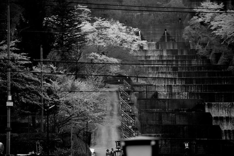 桜咲く坂道