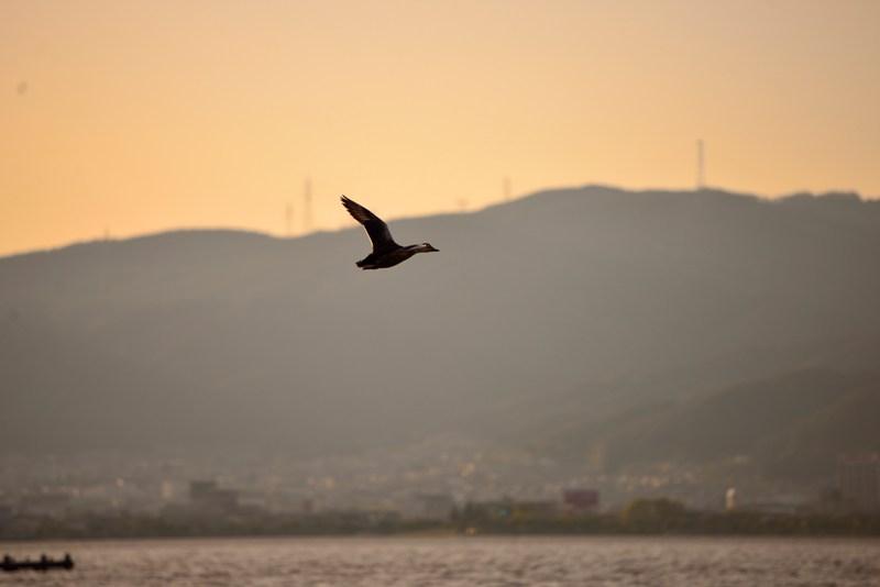 2014.5.10 諏訪湖夕景3