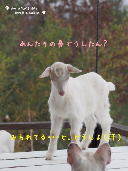 yagi2_5914.jpg