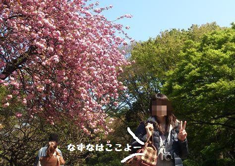 八重桜とー