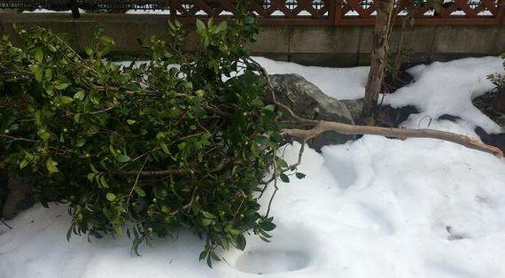 大雪で折れたよ