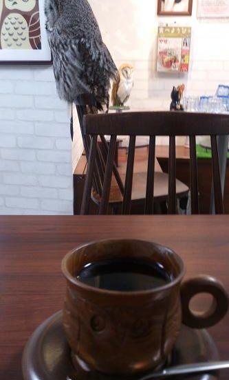 フクロウのカップ