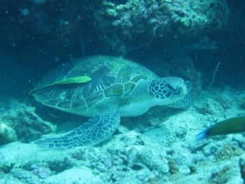 タオ島、水中写真、撮影あゆむ