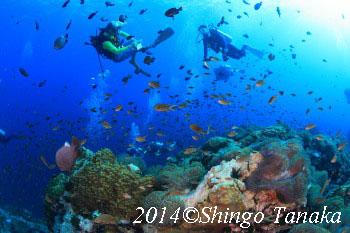 2014年タオ島GW