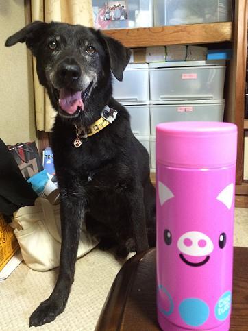 オレの水筒