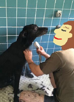 とーちゃんとお風呂03