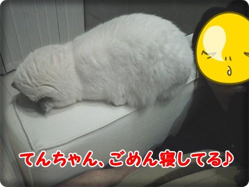 DSC_002.jpg