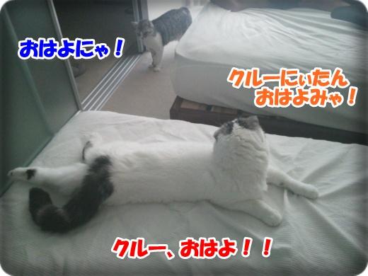 DSC_0490-003.jpg