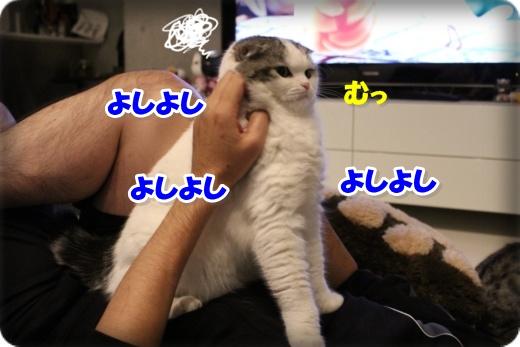 IMG_4047-006.jpg