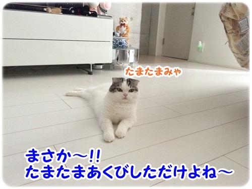 IMG_7799.jpg